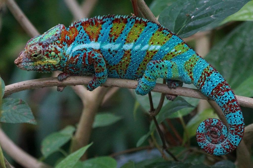 Kameleon - zmiana identyfikacji wizualnej